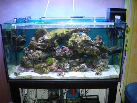 nouvel habitant aquarium